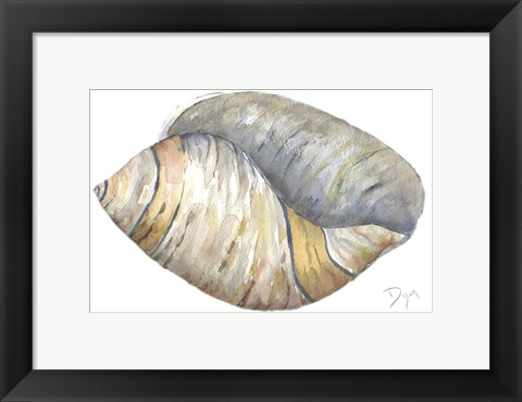 Framed Sea Shell Neutral 1 Print
