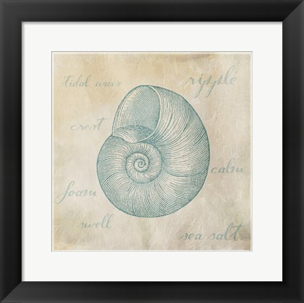 Framed Stamped Shell Three Clean Print