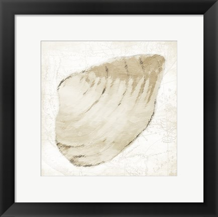 Framed Shell 3 Print