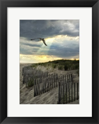 Framed Seagull And Godbeams Print