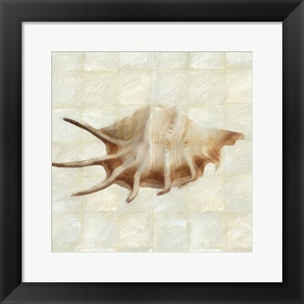 Framed Mother of Pearl Shell 1 Print