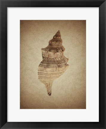 Framed Shell on Sepia 2 Print