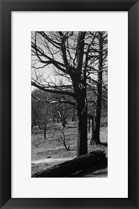 Framed Burned Trees Print