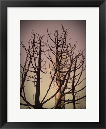 Framed Burned Trees 3 Print