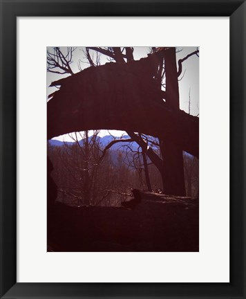 Framed Burned Trees 9 Print