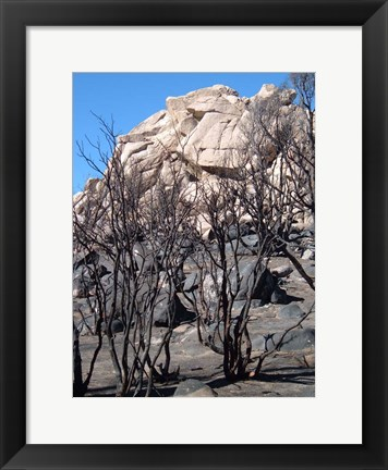 Framed Burned Forest 3 Print