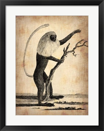 Framed Vintage Monkey Print