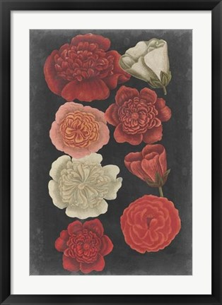 Framed Midnight Roses Print