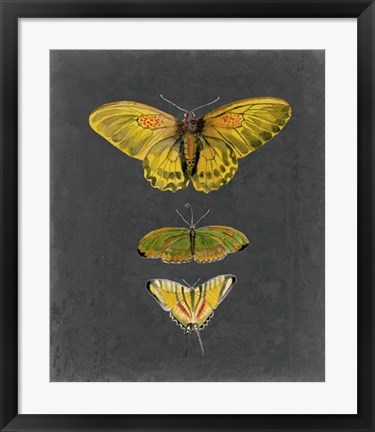 Framed Butterflies on Slate I Print