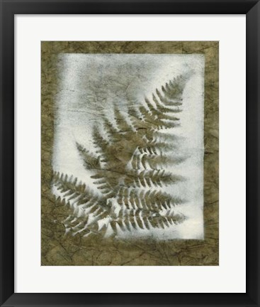 Framed Shadows & Ferns I Print