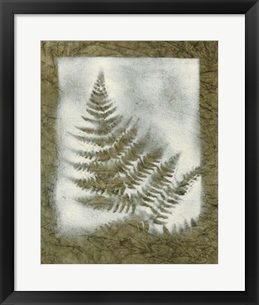 Framed Shadows & Ferns II Print