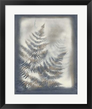 Framed Shadows & Ferns VI Print