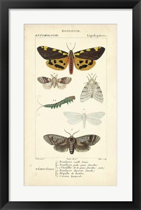 Framed Antique Butterfly Study I Print