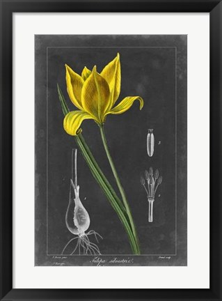 Framed Midnight Tulip VI Print