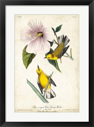 Framed Yellow Swamp Warbler Print