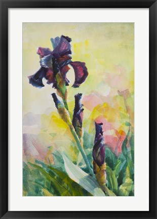Framed Purple Iris Print