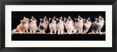 Framed Klassical Kittens Print