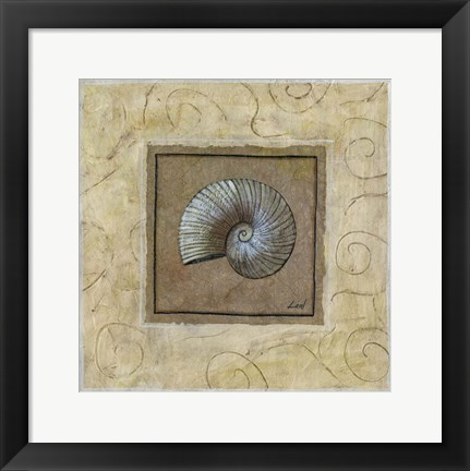 Framed Sea Shell II Print