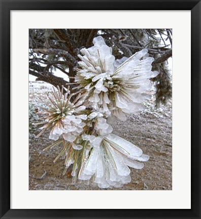 Framed Pine Needles and Ice Print