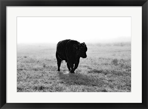 Framed Bull After Ice Storm Print