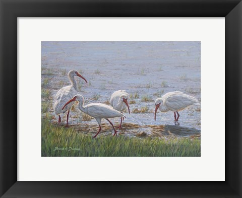 Framed Ibis Excursion Print