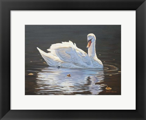 Framed Illuminated Swan Print