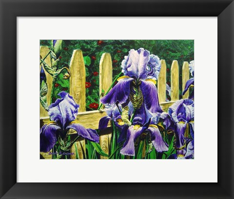 Framed Iris By The Fence Print