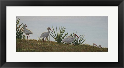 Framed Ibis Outing Print