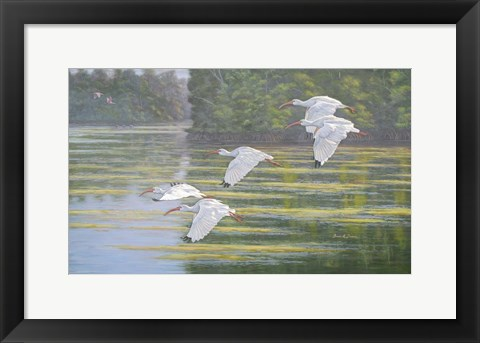 Framed Flight of the Ibis Print