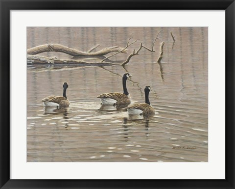 Framed Early Spring Geese Trio Print