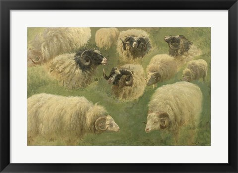 Framed Black-Faced Ram and Sheep, 10 studies Print