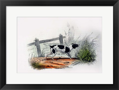 Framed Dog II Print