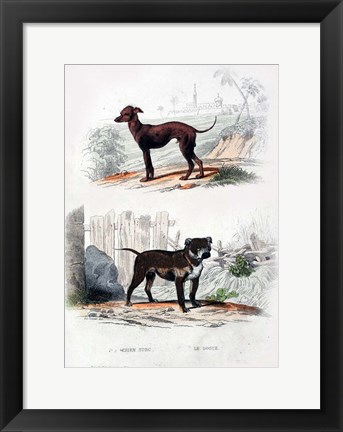 Framed Pair of Dogs II Print