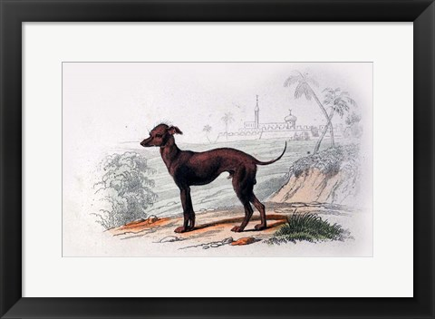 Framed Dog III Print