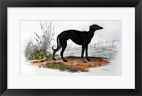 Framed Dog VI Print