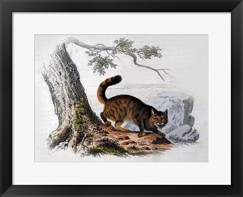 Framed Wild Cat Print