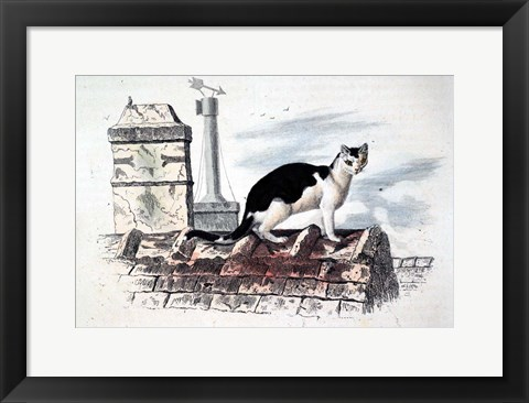 Framed Cat on Roof Top Print