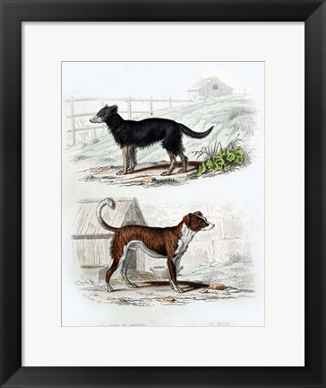 Framed Pair of Dogs IV Print