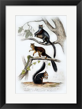 Framed Squirrels Print