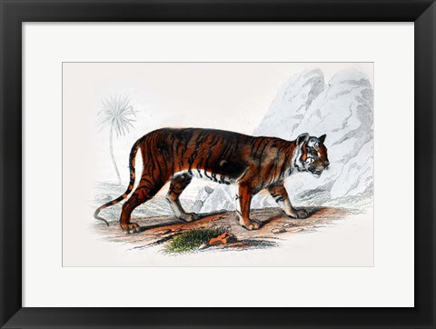 Framed Tiger Print
