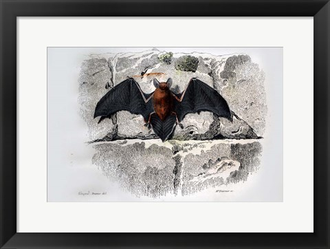 Framed Bat I Print