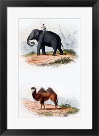 Framed Elephant and Camel Print