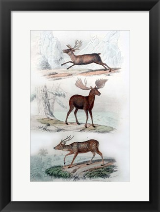 Framed Stag, Elk and Deer Print