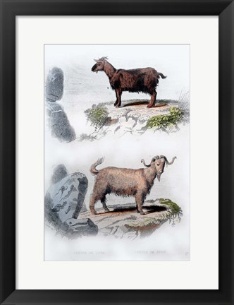 Framed Pair of Goats Print