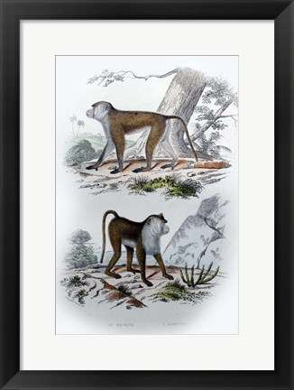 Framed Pair of Monkeys V Print