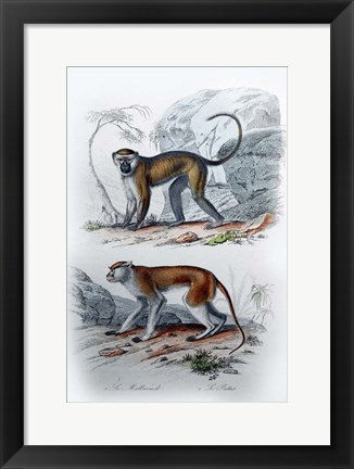 Framed Pair of Monkeys VI Print