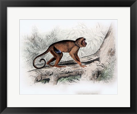 Framed Monkey X Print