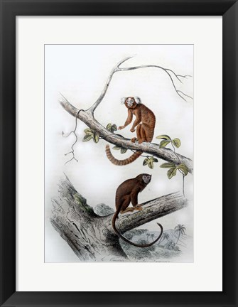 Framed Pair of Monkeys XI Print
