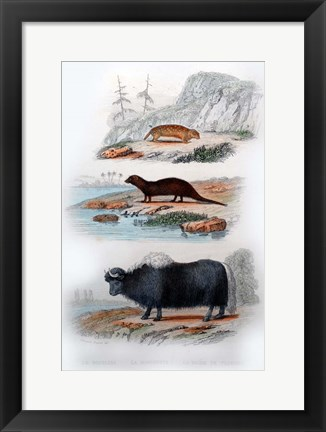 Framed Three Mammals III Print