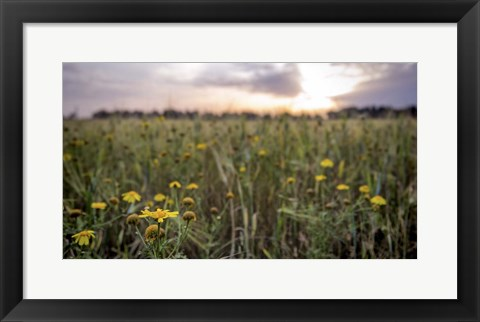 Framed Flowers in the sunset Print